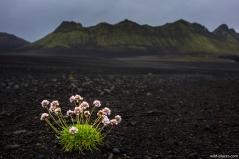 Highlands near Langisjör, Iceland