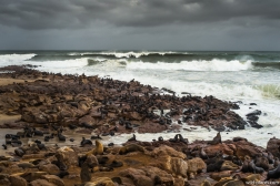 Seal Colony, Cape Cross, Namibia