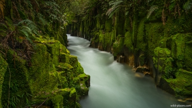 Whaiti-Nui-A-Toi Canyon, Whirinaki Forest Park, North Island, New Zealand