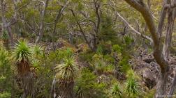 Lake Dobson Road, Mt Field NP, Tasmania, Australia