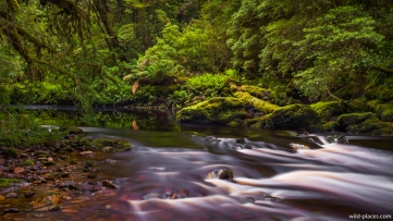 Bird River, Bird River Walking Track to Kelly Basin, Tasmania, Australia