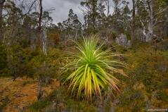 Pine Valley, Cradle Mountain-Lake St Clair NP, Tasmania, Australia
