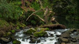 A.H. Reed Memorial Kauri Park, Whangarei, New Zealand