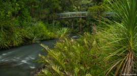 Whangarei Falls, North Island, New Zealand