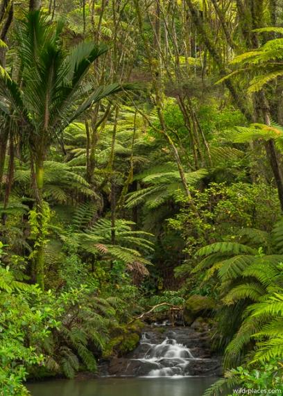 309 Road, Coromandel, North Island, New Zealand