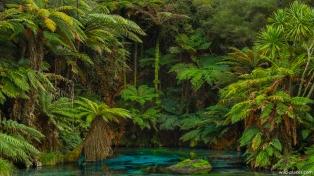 Blue Spring, Te Waihou Walkway, North Island, New Zealand