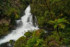Whirinaki Forest Park, North Island, New Zealand