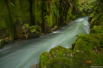 Whaiti-Nui-A-Toi Canyon, Whirinaki Forest Park, North Island, New Zealand