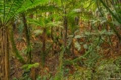 Mt Damper Falls, Forgotten World Highway, SH43, North Island, New Zealand