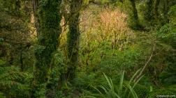 Egmont National Park, Kamahi Loop Track, North Island, New Zealand