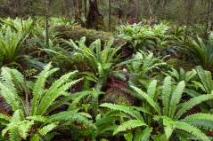 Borland Nature Walk, Fjordland NP, South Island, New Zealand
