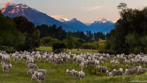 Mt Nicholas Road, South Island, New Zealand