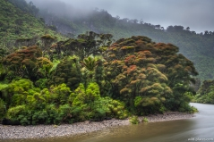 Paparoa NP, South Island, New Zealand