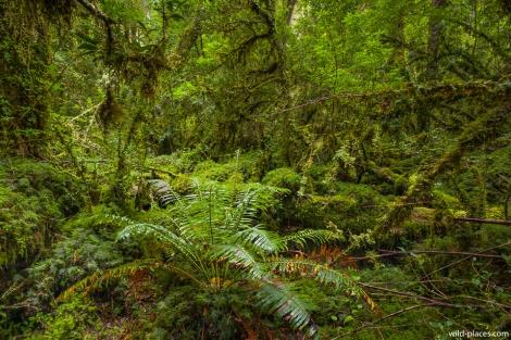 Bosque Encantado, Parque Nacional Queulat