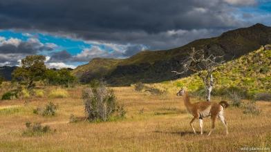 Parque Patagonia, Valle Chacabuco