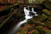 Kleine Ohe, Bavarian Forest, Germany