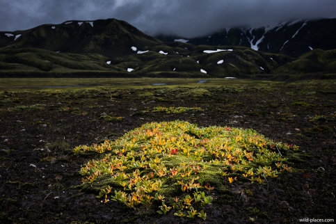 Highlands near Landmannalaugar