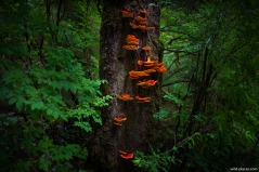 Schooner Cove Trail, Pacific Rim National Park, Vancouver Island, BC, Canada