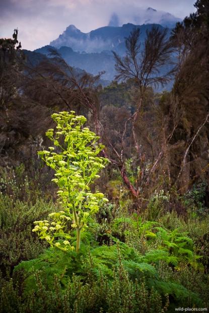 Flowers near Bigo Tourist Camp, Rwenzori, Uganda