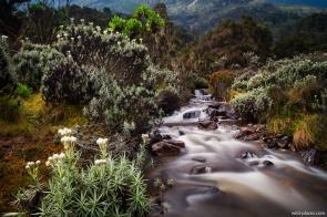 Bujuku River Valley, between John Mate Camp and Bujuku Hut, Rwenzori, Uganda