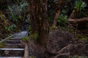 Trail from Bujuku Hut to Scott Elliot Pass, Rwenzori, Uganda