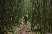 Bamboo Forest, Rwenzori, Uganda