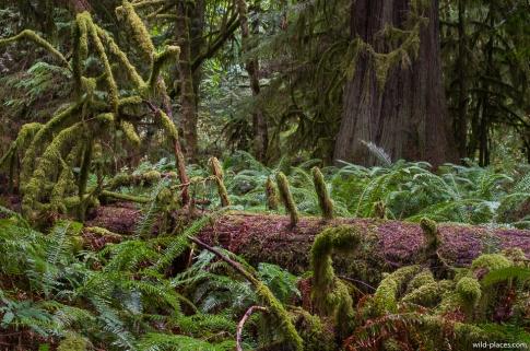 Cathedral Grove, MacMillan Provincial Park, Vancouver Island, BC, Canada