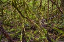 Horizontal Scrub, Creepy Crawly Nature Trail