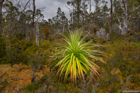 Pine Valley, Cradle Mountain-Lake St Clair NP