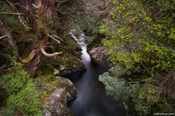 Pencil Pine Creek, Enchanted Walk, Cradle Mountain NP