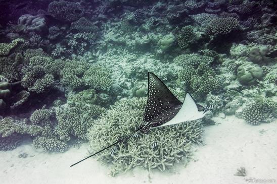 Makunudu, Maldives