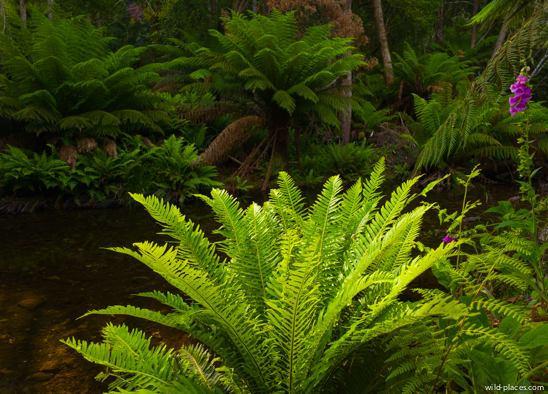 Evercreech Rainforest