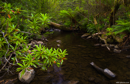 Tahune Forest Reserve
