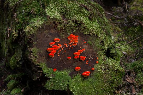 Mushrooms at the Philosophers Falls Trail