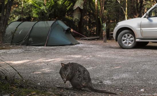 Campground Corinna