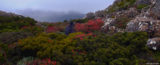Mt Field NP, K-Col, Rodway Range, Tasmania