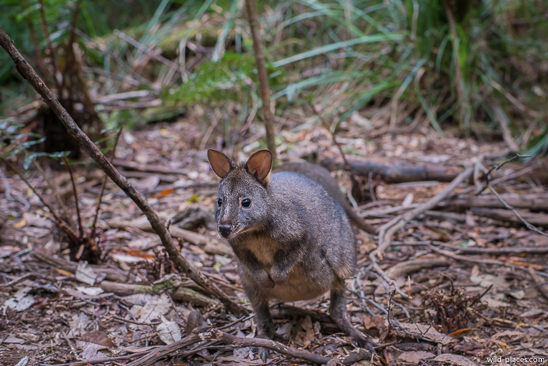 Dismal Swamp Sinkhole, Tasmania