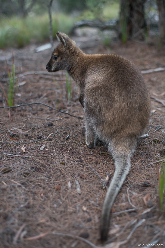 Freycinet National Park, Wineglass Bay Lookout Track, Tasmania