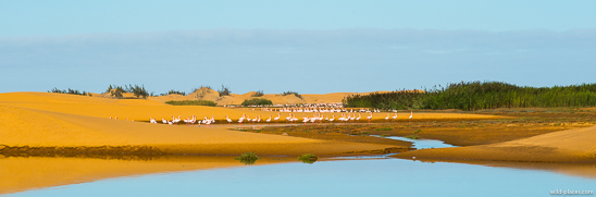 Bird Sanctuary, Walvis Bay