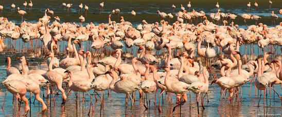 Flamingo colony, Walvis Bay
