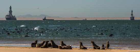 Pelican Point, Walvis Bay