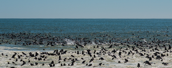 Pelican Point, Walvis Bay