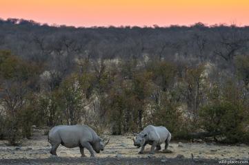 Rhino, Etosha National Park, Namibia