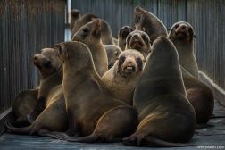 Seal Colony, Cape Cross, Namibia