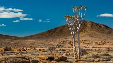 Blutkuppe, Namibia