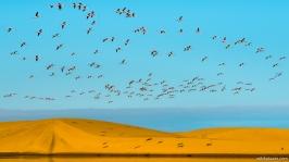 Bird Sanctuary, Walvis Bay, Namibia