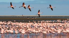 Flamingo Colony, Walvis Bay, Namibia