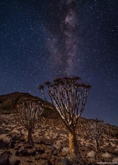 Milky Way over Quiver Trees at Koiimasis Ranch, Tiras Mountains, Namibia