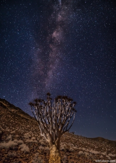 Milky Way over Quiver Tree at Koiimasis Ranch, Tiras Mountains, Namibia
