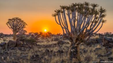Mesosaurus Camp, Quiver Tree Forest, Keetmanshoop, Namibia